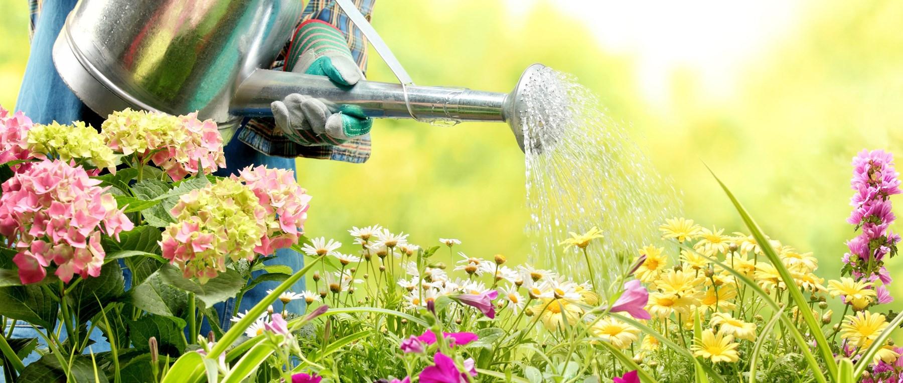 Garden being watered