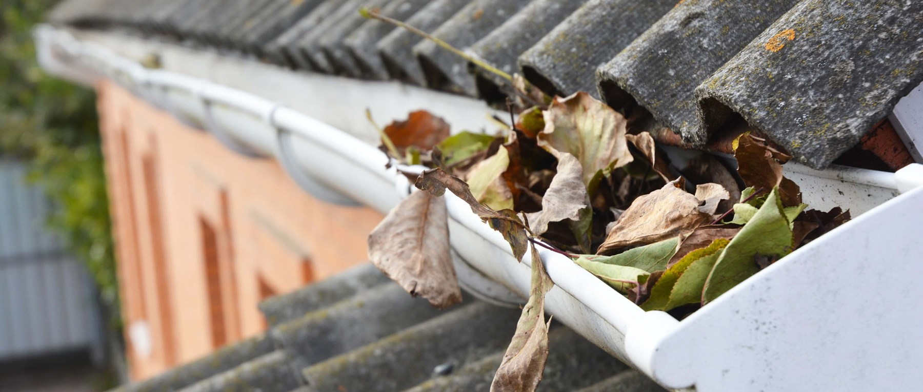 Leaves in a gutter