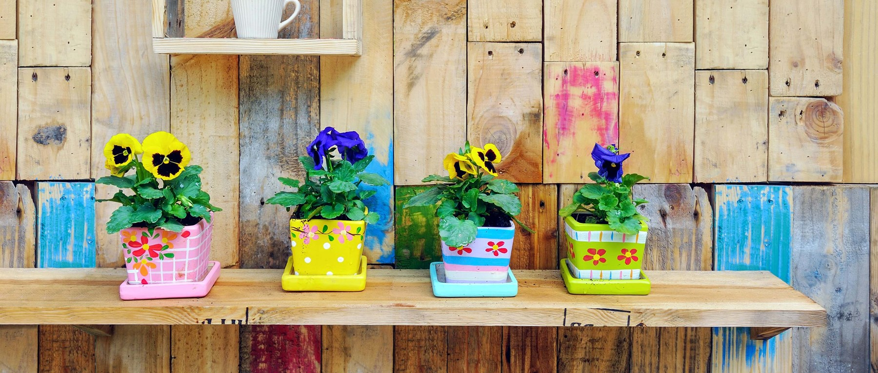 Painted pots with plants in
