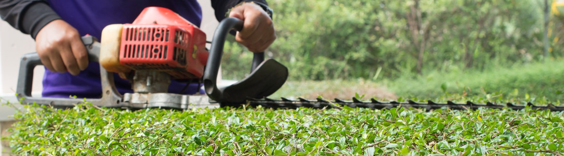 Man using trimmer to cut garden hedge